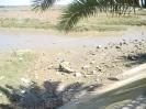 Der Naturpark Marismas de Isla Cristina mit seine vielfältige Pflanzenart und eine spannende Vogelwelt, 2008